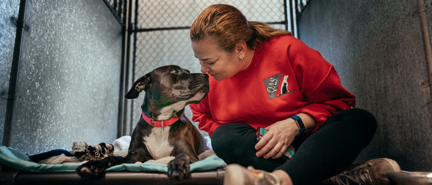 Home - Quincy Animal Shelter